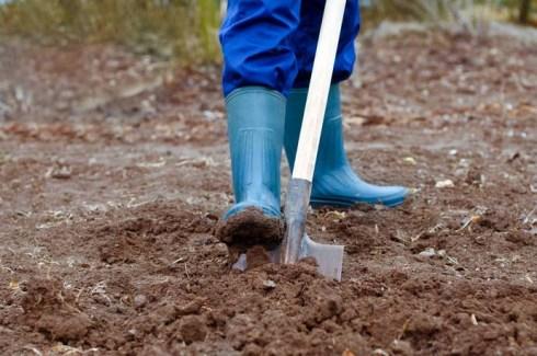 Сажать в песчаной почве 683