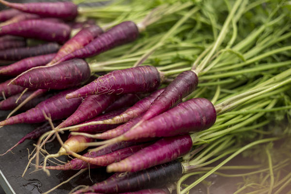 Purple carrot