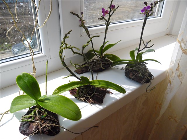 Во что сажают орхидеи 36