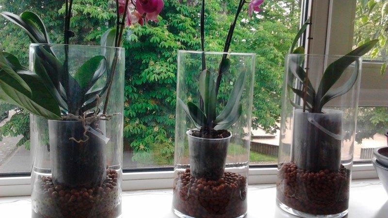 Во что сажают орхидеи