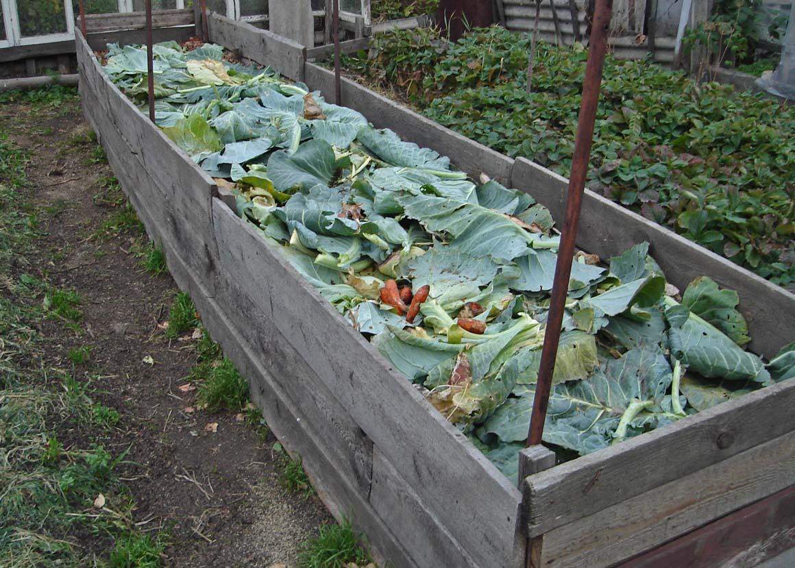 Выращивание огурцов на компостной куче 15