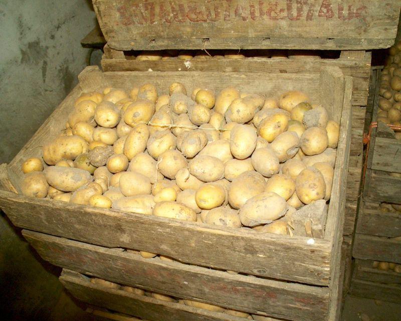 Как сделать закром для картошки 22