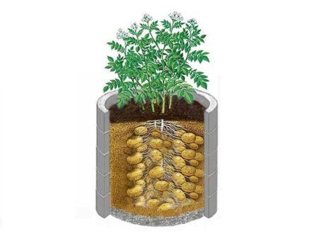 Нетрадиционные технологии выращивания картофеля 43