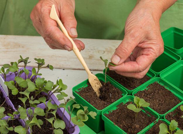 Как правильно в домашних условиях вырастить рассаду 22