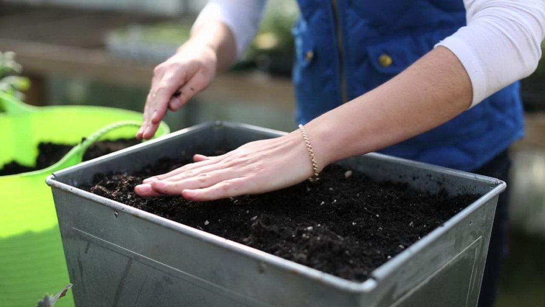 Как готовить семена томатов на рассаду 21