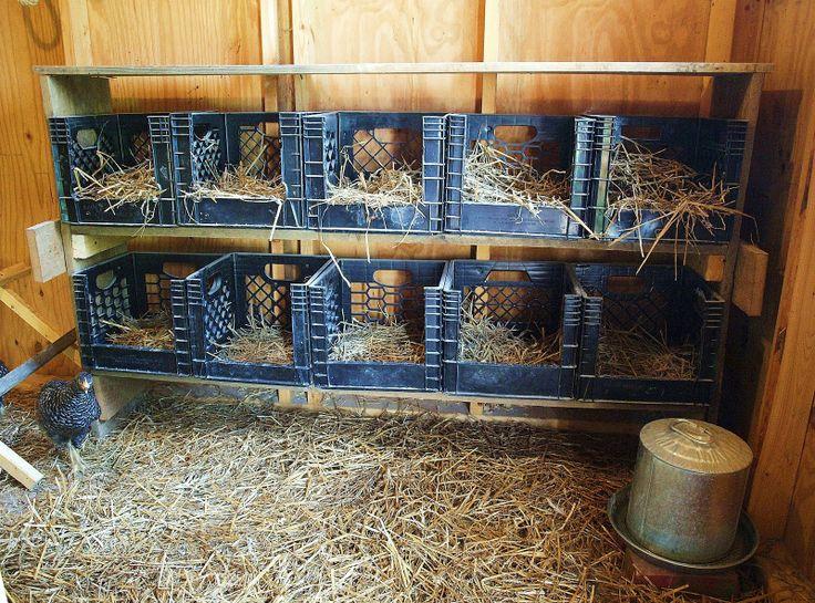 Клетки для куриц-несушек