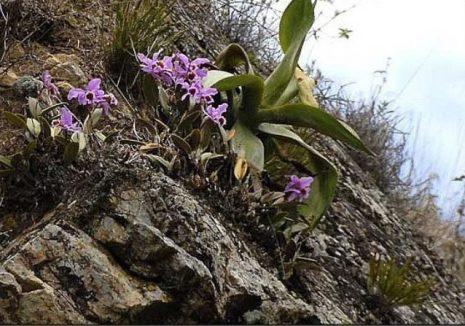 Розовые орхидеи 18 фото описание сорта фаленопсиса Розовый дракон и других название желто-розовой орхидеи Правила ухода