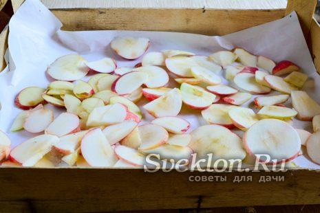распределить нарезанные яблоки на чистой бумаге
