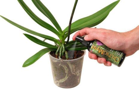 udobrenie-orhidej