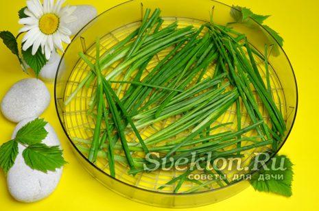 заполнить поддон первым слоем целого зеленого лука