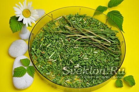 высушенный зеленый лук
