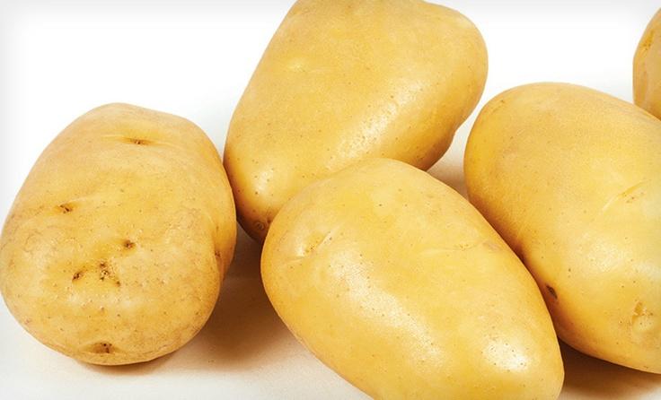 Картофель зекура описание и характеристика сорта урожайность с фото