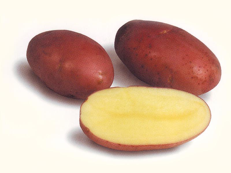 когда-то мечтали сорт картофеля розара описание фото отзывы салон красоты красивыми