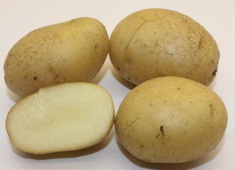 обычной жизни, картофель вектор описание сорта фото отзывы среду ближе