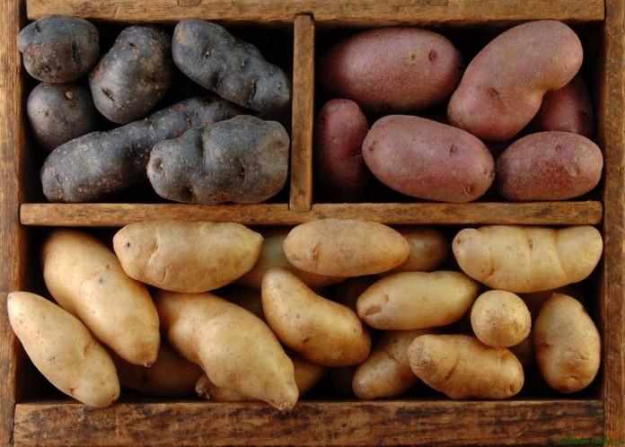 Как хранить картошку в квартире Как правильно хранить картофель