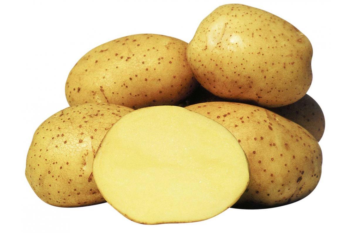 Ранний картофель рано и садим