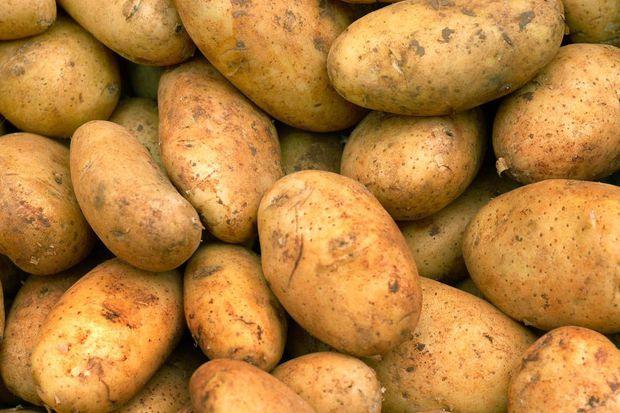 Характеристики и особенности выращивания картофеля Бриз