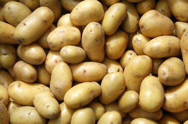 Картофель скарб - характеристика сорта, отзывы