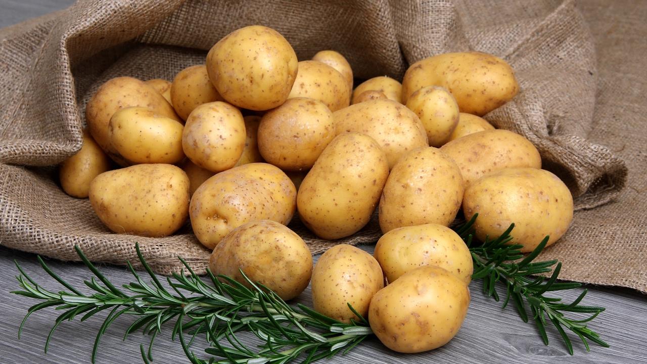 Всё о картофеле Невский - описание сорта, посадка, уход и другие аспекты   фото
