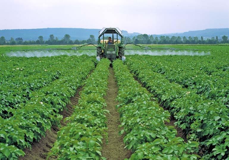 Сеникация и десикация картофеля: описание, сеникация суперфосфатом, отзывы