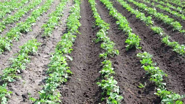 приспособление для триммера для прополки картофеля