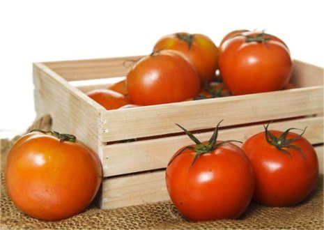 tomat-465x330.jpg