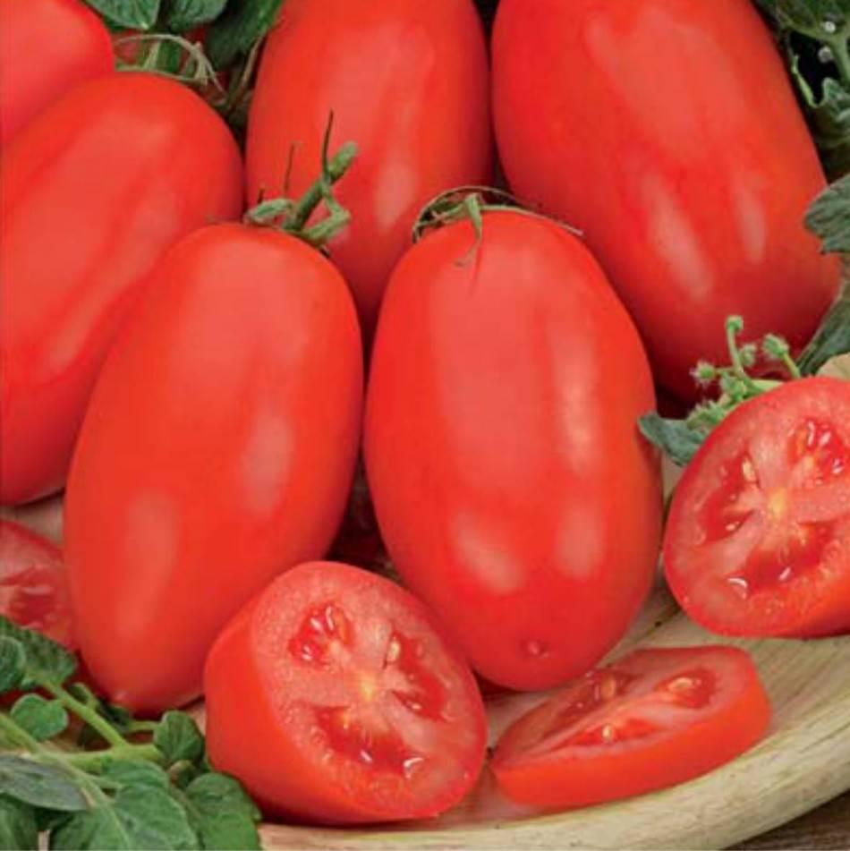 Выращивание богатого урожая помидор: обязательные меры