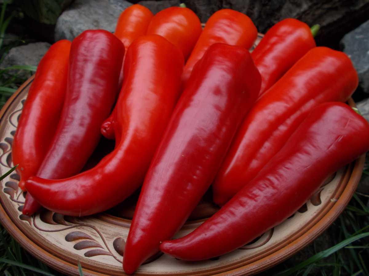 Основные правила выращивания сладкого перца Атлант: описание сорта и фото