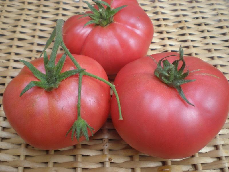 сорта крупноплодных помидоров с фото и описанием устойчива агрессивным воздействиям