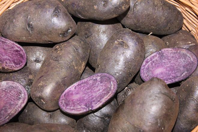 Картофель фиолетового цвета с белой мякотью