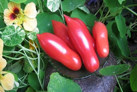 Томат Казанова высокоурожайный сорт