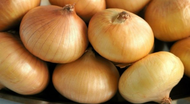 Как посадить и вырастить лук «Стардаст»