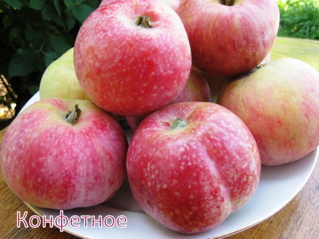 Яблоня Конфетное: описание и характеристика сорта
