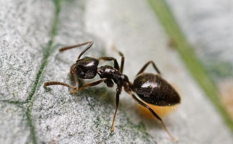 Борьба с муравьями на даче и садовом участке народными и химическими средствами