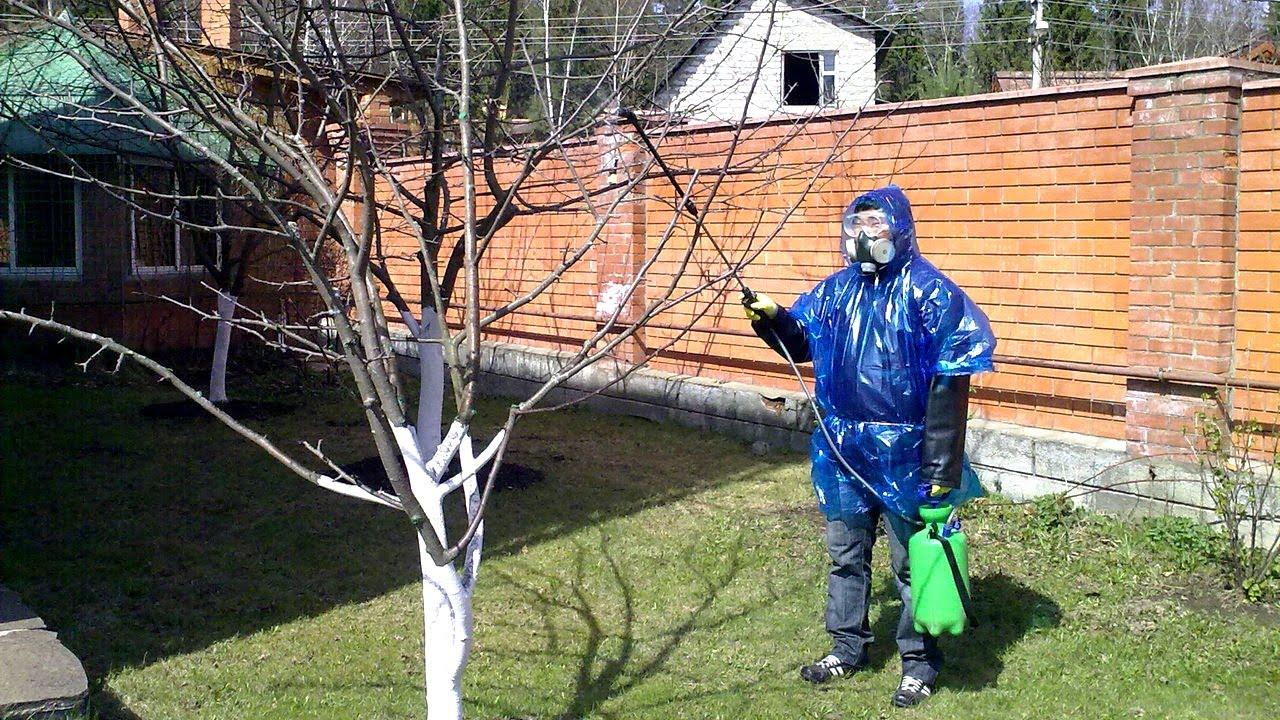 Обработка яблонь весной от вредителей и болезней