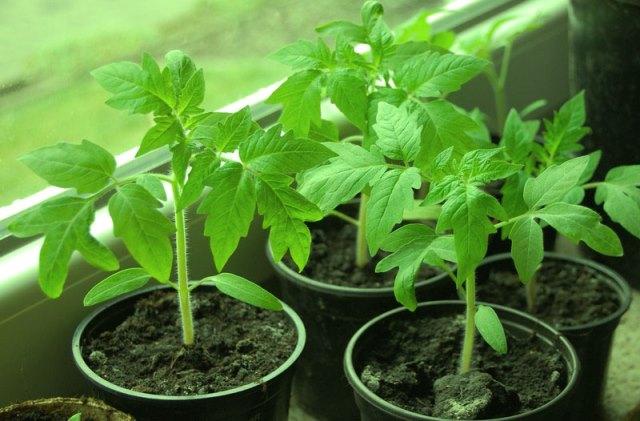 Йод как удобрение для растений