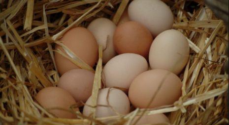 Яйца для высиживания