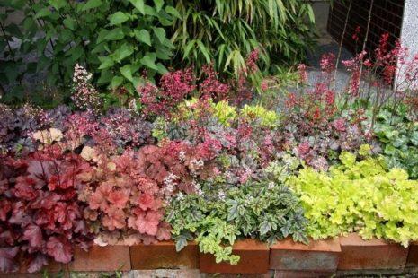 Сочетание с другими растениями