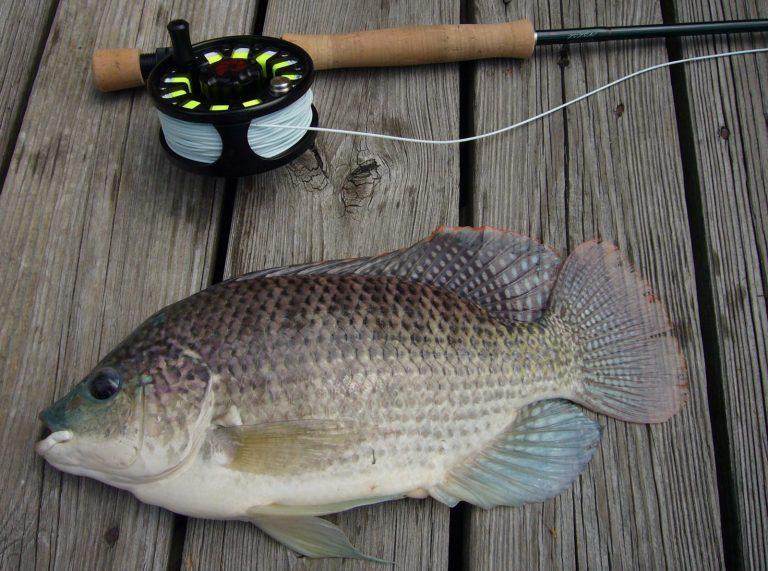 8 июля День рыбака