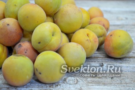 абрикосы моем
