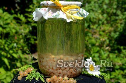 компот из белой смородины