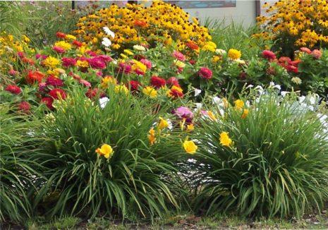 Лилейник с другими цветами
