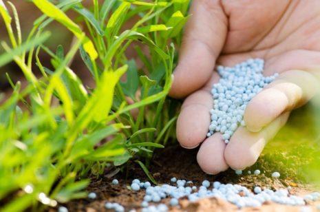 Подкормка фосфором и калием