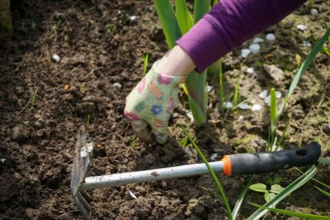 Подкормка почвы лилейников