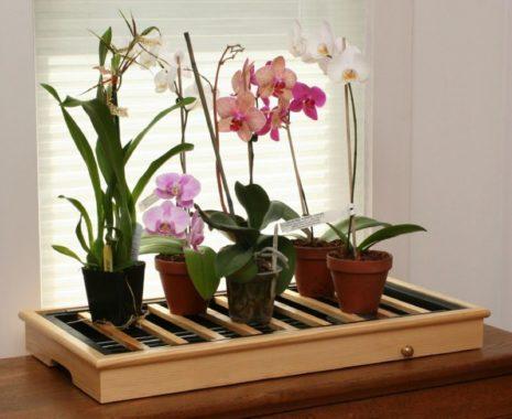 Правильное размещение орхидеи