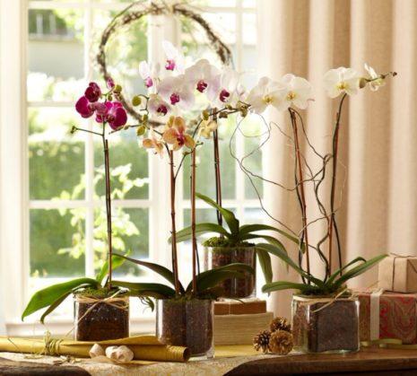 Правильные условия для орхидеи
