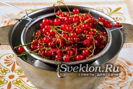 ягоды смородины промыть
