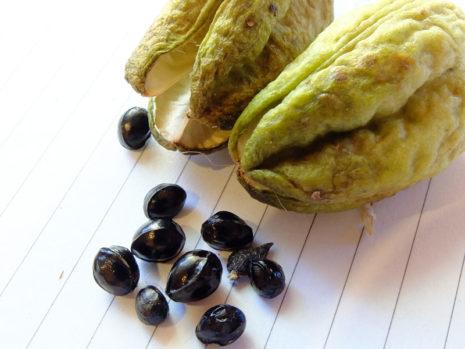 Размножение лилейников семенами