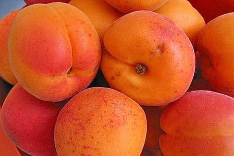 Выбираем абрикосы