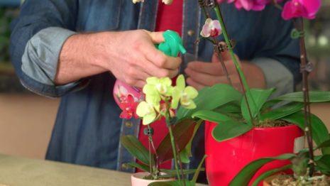Выбираем удобрения для орхидеи